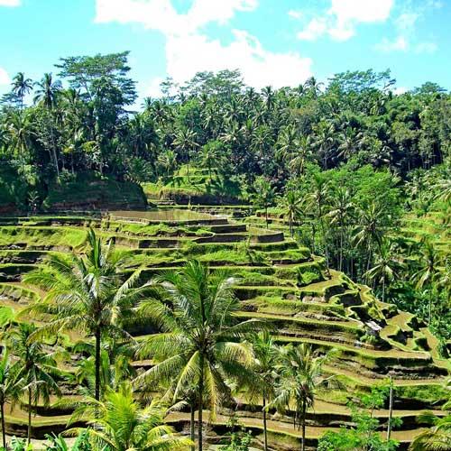 Senada Batik Bali Wonderful Island Of Bali Tegalalang